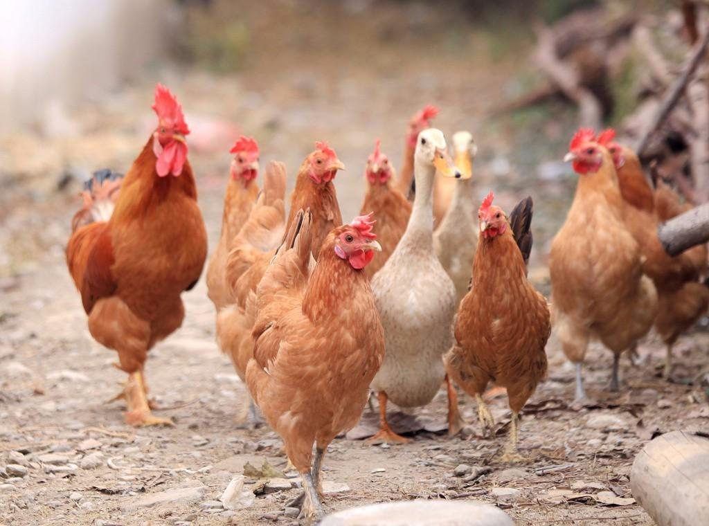 提醒:近期赴韩国旅行谨防禽流感疫情